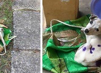 Salvarea unui cățeluș închis într-o sacoșă pe marginea drumului!