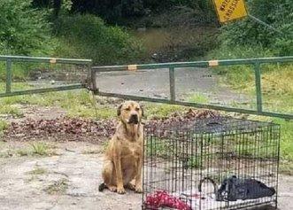 Lăsat într-un loc împreună cu toate lucrurile sale, un câine își așteaptă neclintit familia!