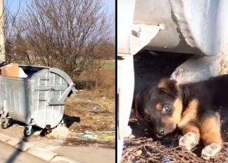 Neputința unei familii în pandemie! Câinele a fost închis între ușă și grilaj