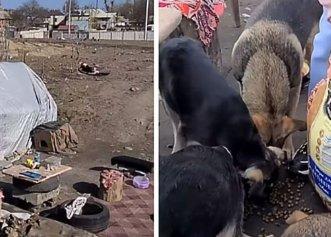 Chiar dacă nu are la rândul lui un adăpost, un bărbat îngrijește peste 30 de câini!