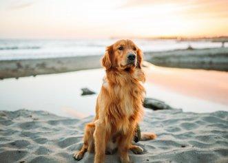 Câinii și problemele legate de bolile care afectează oasele și articulațiile! Totul despre prevenire și tratare
