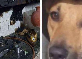 După ce a fost adoptat dintr-un adăpost, un câine își salvează familia în timpul unui incendiu devastator!