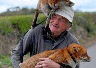 După ce a salvat două vulpi de pe stradă, un bărbat devine cel mai bun prieten al lor!