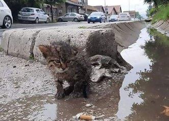După ce a găsit pe stradă un pisoi la un pas de moarte, femeia decide să îi schimbe viața!
