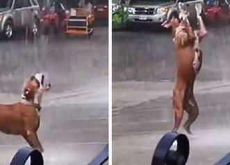 Imagini adorabile cu un cățel care se bucură de ploaie! Patrupedul este cel mai fericit