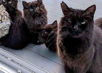Recunoștința unei pisici fără stăpân față de femeia care a salvat-o! Ea îi face cunoștință cu cei șase pui