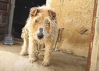 O viață petrecută legat de un perete! Un câine a fost salvat după 15 ani de chin