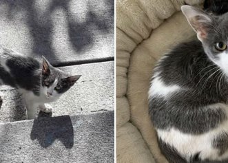 După o lungă căutare, o pisică și-a găsit o familie exact așa cum își dorea!