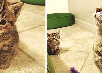 Născut într-un adăpost, un pui de pisică are parte de un tratament deosebit din partea mamei sale!