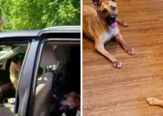 După ce a adoptat cei mai în vârstă câini dintr-un adăpost, o femeie decide să le ofere cele mai frumoase clipe!