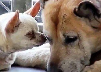 Abandonați pentru că erau prea bătrâni, doi câini au avut parte de o adevărată surpriză!