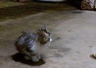 Salvarea unui pisoi în timpul unei furtuni! Tinerii decid să o adopte, iar acum este de nerecunoscut