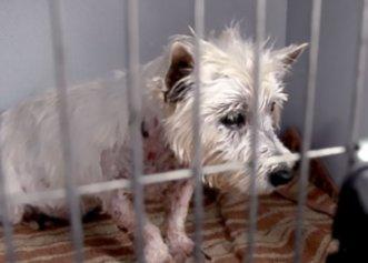 O cățelușă a fost salvată după 11 ani de chin! Patrupedul a reușit în cele din urmă să aibă o familie
