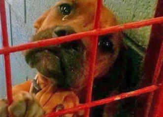 Soarta unui biet câine din adăpost care implora să fie adoptat de o familie iubitoare!