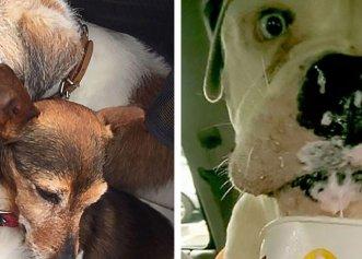 O asistentă a făcut un adăpost special pentru câinii bătrâni! Animalele de companie au fost salvate de pe străzi