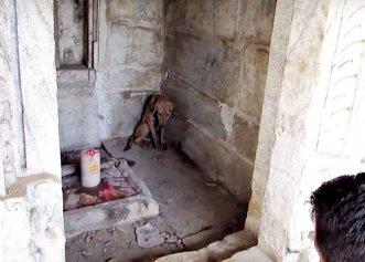 Salvarea unui cățel refugiat într-un templu! Patrupedul era extrem de speriat și plin de răni