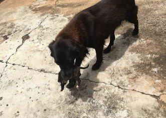 Imagini impresionante cu un câine fără stăpân care salvează un pui aruncat la gunoi!