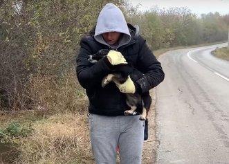 Bucuria unui cățel salvat de pe marginea unui drum! Acum, el se poate bucura de o familie