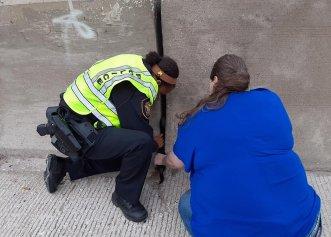 Un pisoi blocat, operațiunea de salvare a poliției rutiere! Cum a fost totul posibil