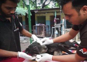 Într-un colț de curte, un câine bătrân și bolnav s-a retras pentru a fi în siguranță! Povestea emoționantă