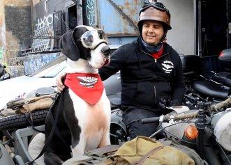 Un dog german, o adevărată vedetă pe internet! Plimbarea favorită pe motocicletă alături de stăpânul său
