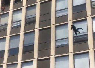 O pisică a sărit de la etajul cinci al unei clădiri în flăcări! Ce s-a întâmplat cu felina