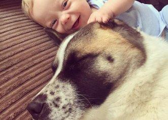 Legătura specială dintre câine și stăpâna lui! Ce a simțit patrupedul la spital