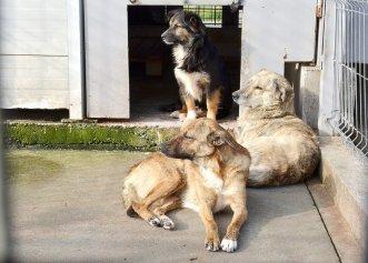 Un adăpost pentru animalele abandonate, soluția unui bărbat pentru o viață fericită și împlinită!