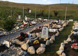 Cel mai mare cimitir pentru animalele de companie din România! Prețul unui loc de veci