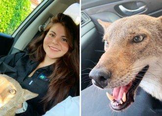 Surpriza unei tinere care a crezut că salvează un cățel! Animalul era extrem de iubitor și blând
