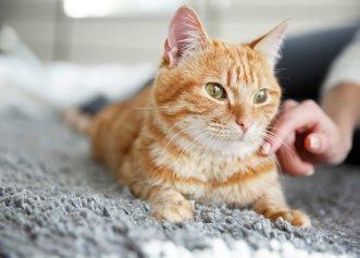 Cum să mângâi corect o pisică? Sfaturile specialiștilor pentru a observa când este nevoie să îi oferim afecțiune