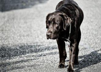 Displazia de șold, afecțiunea comună câinilor de talie mare! Află cum o poți trata și rasele predispuse la îmbolnăvire