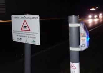 DN1, drum mai sigur pentru animalele sălbatice și șoferi! Gardul virtual instalat salvează vieți