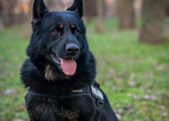 Ministerul Afacerilor Interne are cu ce să se mândrească! Un câine polițist a salvat toată averea a unei bătrâne din Brăila
