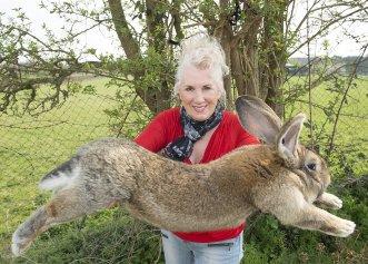 A fost furat Darius! Cel mai mare iepure din lume a dispărut din adăpostul său din Marea Britanie