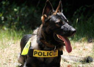 Val de indignare după ce un polițist își agresează câinele K-9! Totul a fost filmat în timpul unei acțiuni speciale