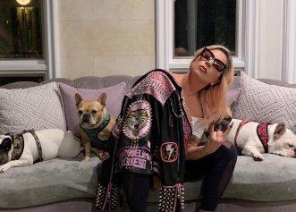 Lady Gaga, ținta unui act criminal! Câinii vedetei au fost răpiți, după ce bărbatul care îi plimba a fost împușcat!