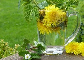 Beneficiile păpădiei. Planta medicinală care poate trata cancerul, hepatita și afecțiunile renale