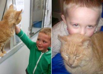 Povestea incredibilă a unui băiețel! A mers să adopte un nou prieten, însă în adăpost și-a găsit pisica pierdută de 1 an