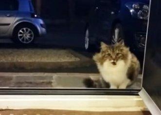 Surpriza unui bărbat atunci când are parte de o vizită neobișnuită! Pisica își dorea un adăpost