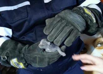 Un supermarket din Bistrița, locul de unde a fost salvată o pisică și puii săi abia născuți! Starea micuților este bună