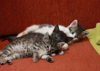 O poveste de prietenie dintre două pisici era pe cale să se termine când una dintre ele a fost adoptată! Însă, totul avea să se schimbe