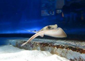 Premieră la un acvariu din Noua Zeelandă! Două femele au născut un pui de pisică de mare fără prezența unui mascul