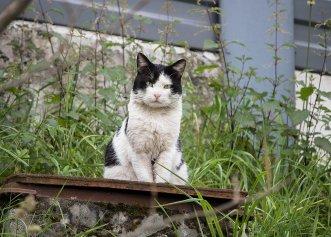 """Rezultate remarcabile în campania """"Pisici la muncă""""! Felinele eliberate pe străzi au eradicat șobolanii"""