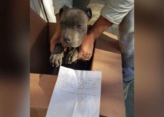 Sătul să își vadă câinele bătut de tatăl său, un băiat de 12 ani a decis să facă un gest cu totul emoționant!