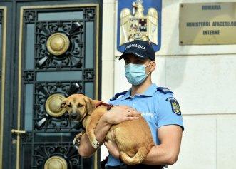 Apar noi reguli cu privire la protejarea animalelor de companie! Poliția Română primește mai multă libertate de acțiune