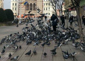 Timișoara, noi restricții privind animalele! Hrănirea porumbeilor sau a altor animale în spațiul public este interzisă!