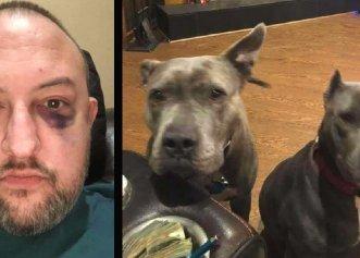 Decizia de a salva doi Pitbulli dintr-un adăpost, salvarea unui bărbat amenințat cu moartea!