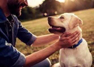 Cum poți să ai grijă de câinele tău și să îl faci fericit! Sfaturi utile pentru iubitorii de animale
