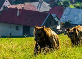 O cameră de monitorizare a faunei din Neamț, inspectată atent de doi urși curioși! Imagini minunate din natură